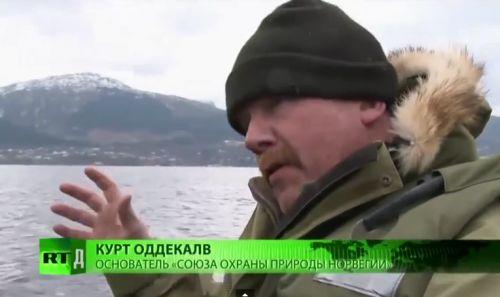 Эколог: «Норвежский лосось — самая токсичная еда во всем мире»