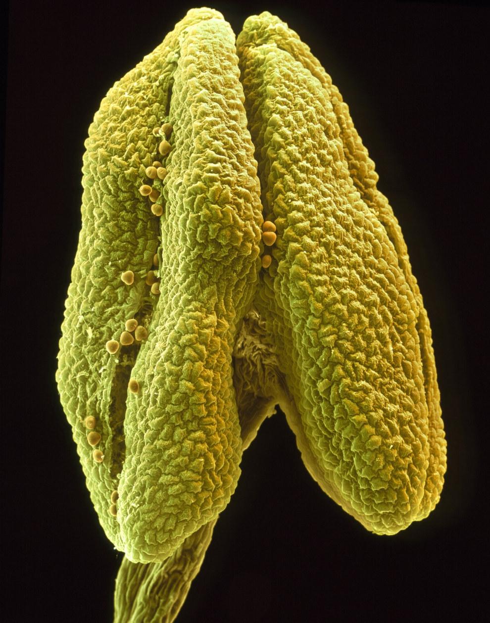 Цветы под микроскопом под микроскопом, цветы