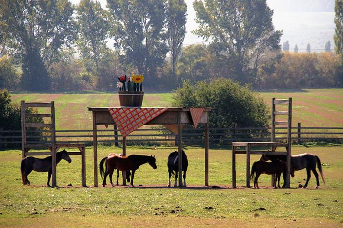 Этому фермеру запретили строить навес для животных. Вот как креативно он вышел из положения в мире, скульптура