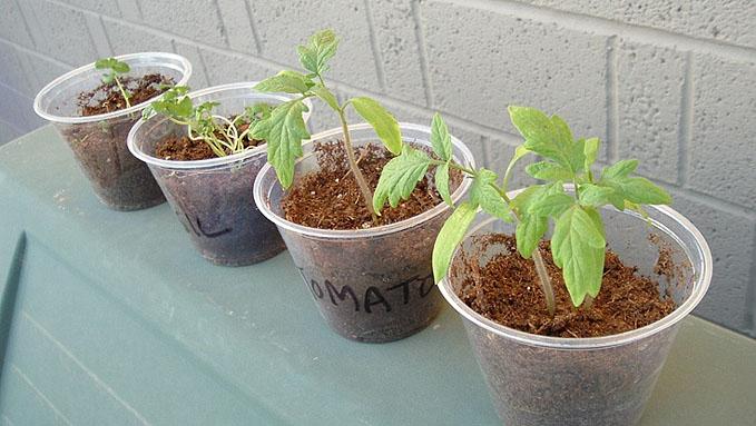 Кошелек дачника - 5 способов сэкономить на рассаде
