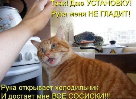ФОТО ЖИВОТНЫХ С КОММЕНТАРИЯМИ