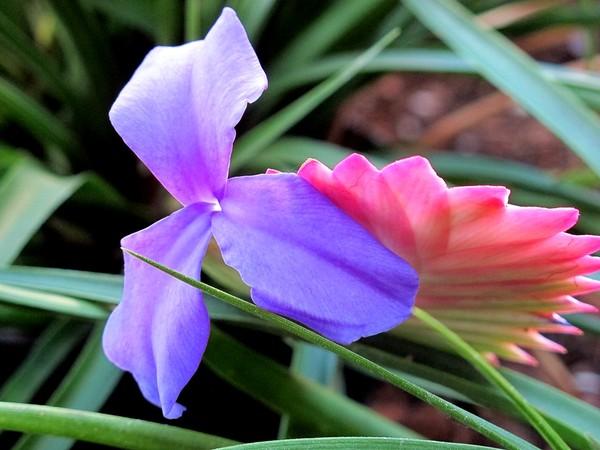 Цветы Майнау
