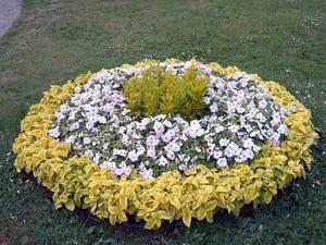 Как вырастить и использовать бальзамины в оформлении комнаты и сада