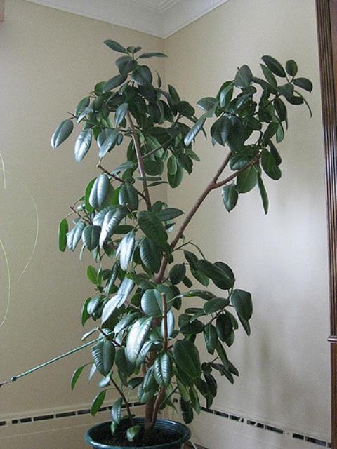 5 лучших растения для офиса