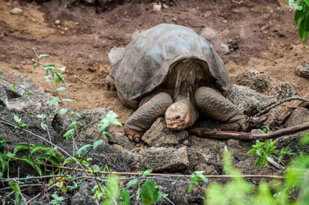 Черепахи на острове Эгрет