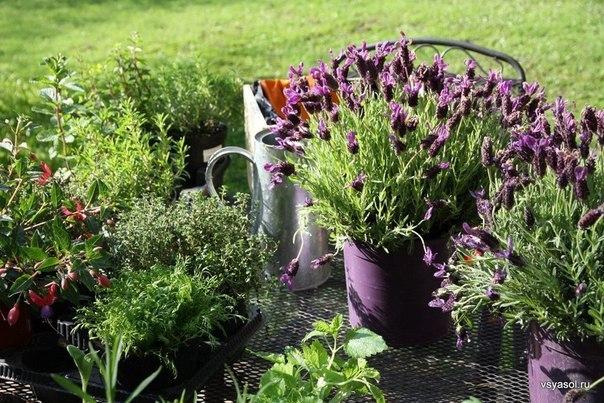 Какие ароматные травы подходят для спальни?