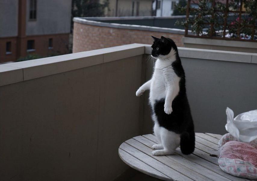 lolcats78 100 лучших фотографий кошек всех времен и народов