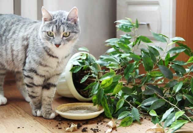Как защитить растения от кота
