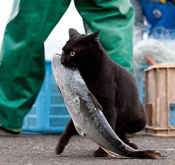 CatThieves15 Котики, которых застали врасплох