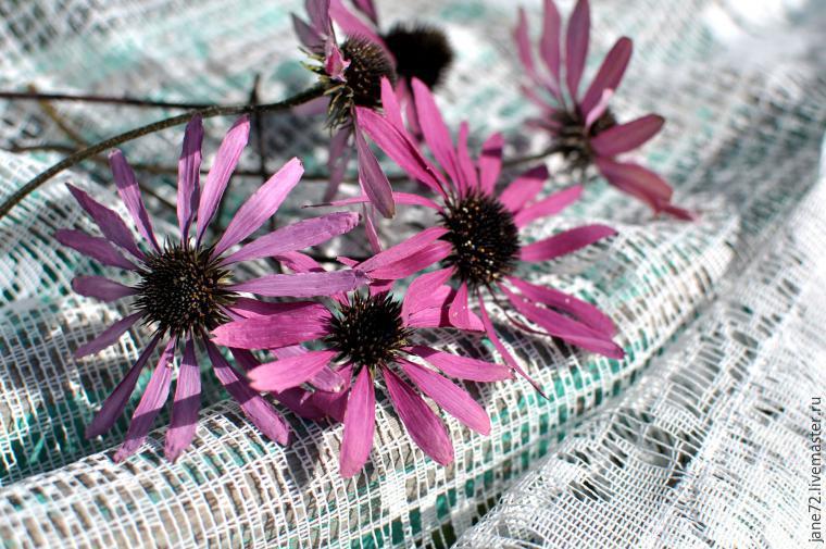 Как высушить живые цветы