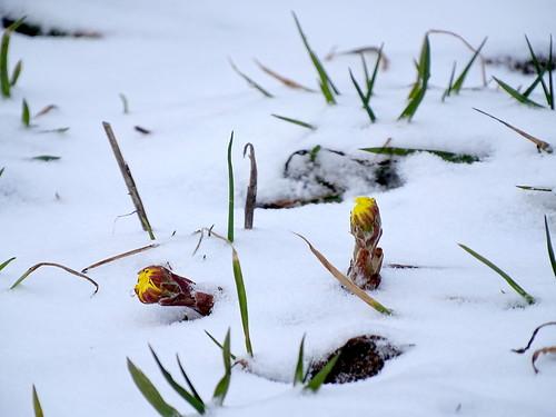 Парадоксы весны