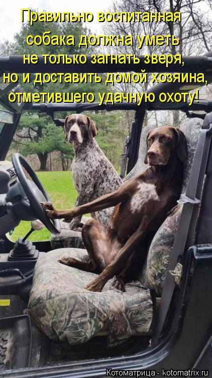 Котоматрица: Правильно воспитанная  собака должна уметь не только загнать зверя,  но и доставить домой хозяина, отметившего удачную охоту!