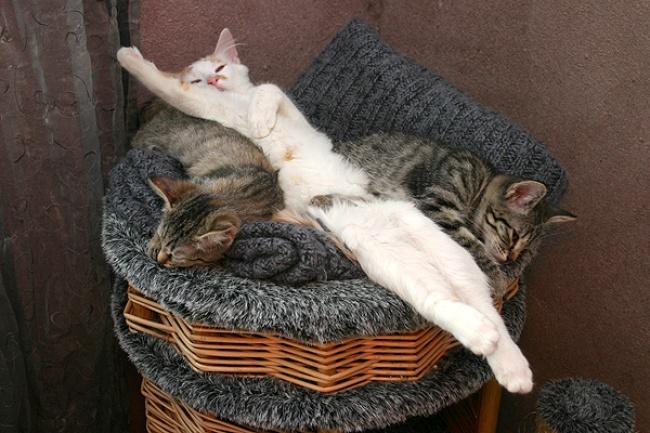 Когда кот спит днем