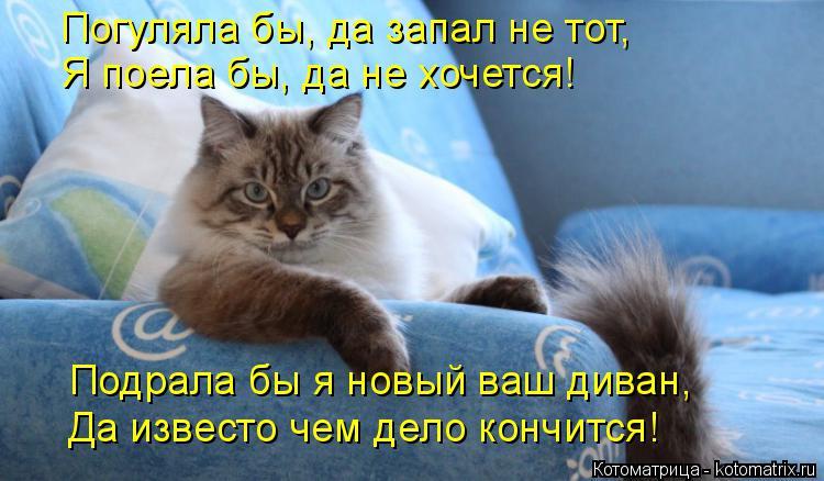 Котоматрица: Погуляла бы, да запал не тот, Я поела бы, да не хочется! Подрала бы я новый ваш диван, Да известо чем дело кончится!