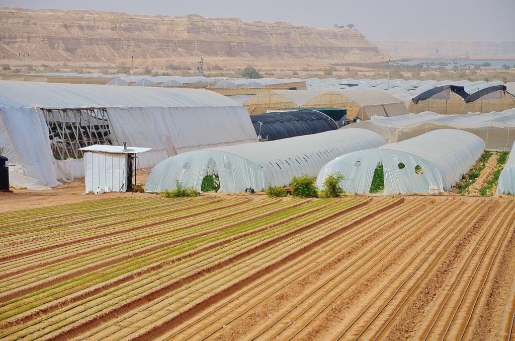 Как выращивают овощи и фрукты  колхозники  Израиля