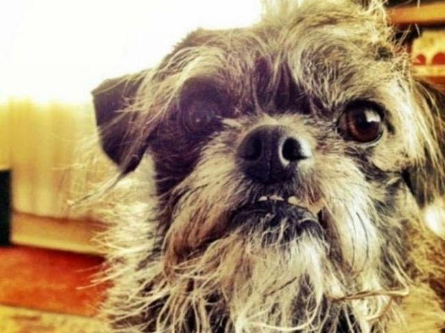 10 непредсказуемых результатов скрещивания собачьих пород