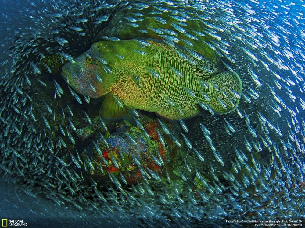 Самые интересные фотографии National Geographic 2014