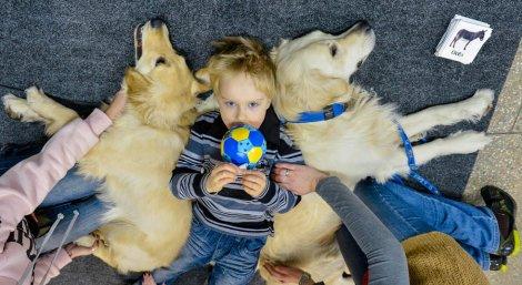 Больных ДЦП сирот из Казани будут лечить с помощью собак.