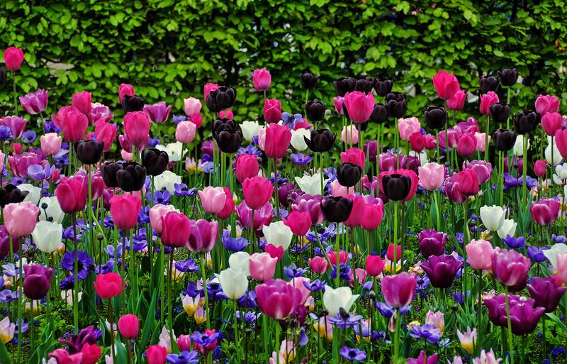 Гонцы проснувшейся весны
