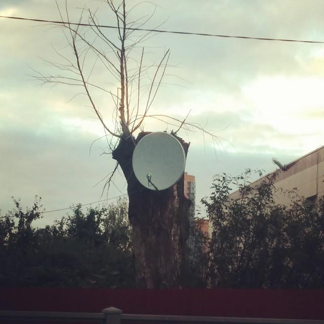 Даже у дятла есть спутниковое TV россия, это россия