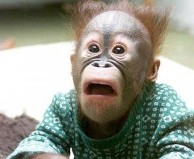 """""""Может, Путин приедет, метнет. Ну, не Путин, так хрен с ним, Медведев"""", - под эгидой министерства культуры РФ в Пермском крае состоялся первый турнир по метанию коровьих лепешек - Цензор.НЕТ 4692"""