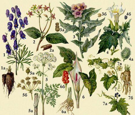 7 самых опасных растений России