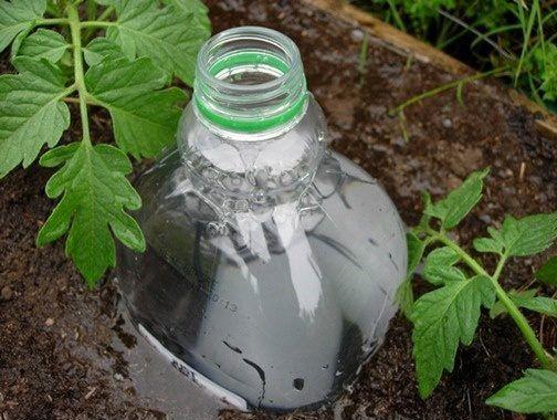 Капельный полив при помощи пластиковой бутылки