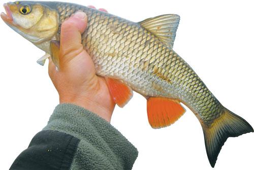 рыбалка на голавля на фидер