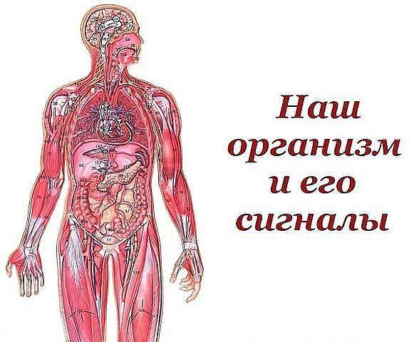 °•○●Наш организм и его сигналы.●○•°