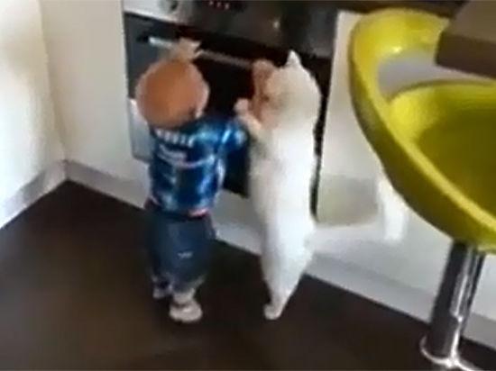 """Как """"умный русский кот"""" спас ребенка"""