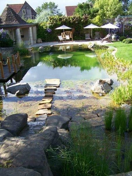 Экосистема: пруд - бассейн на даче