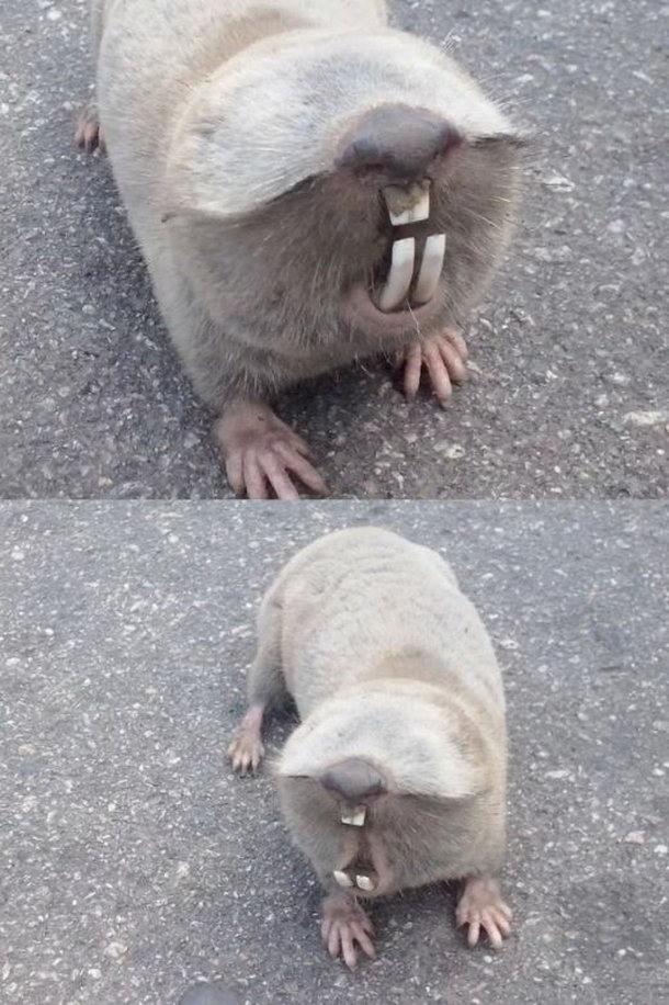 А вы знаете, что это за ослепший зверек?