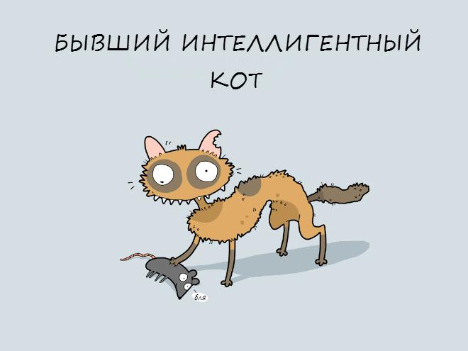 crazycat03