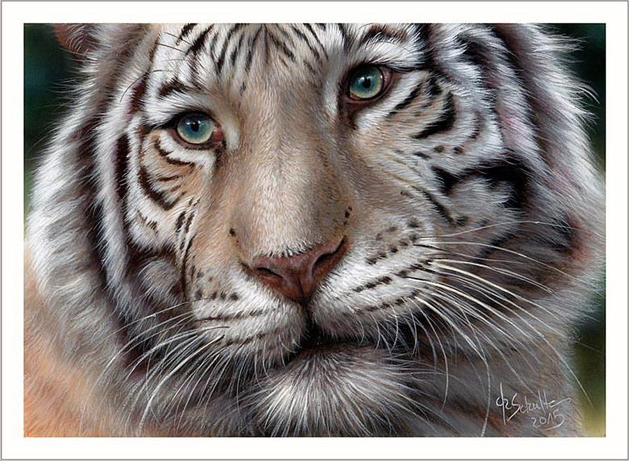 Мир больших кошек, художник-анималист Christina Schulte