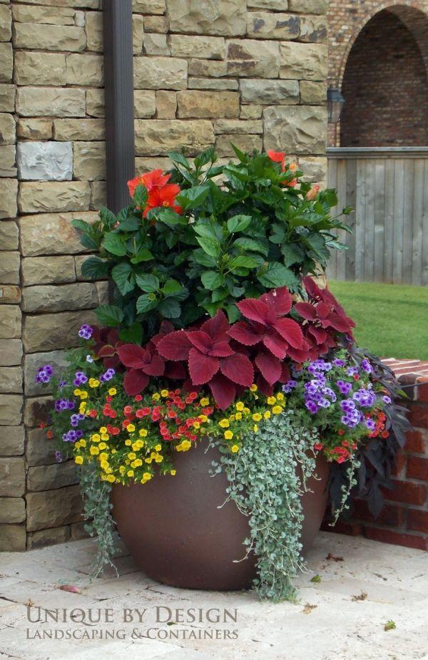 Красивое украшение сада - цветы в контейнере