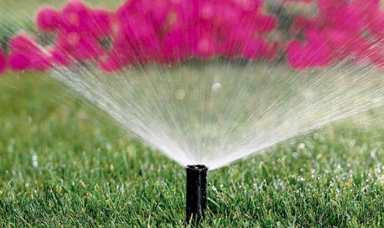 Как правильно поливать цветы: основные правила
