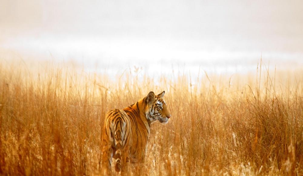 25 лучших фотографий National Geographic 2015