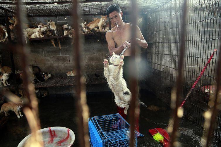 Ужас в глазах: душераздирающее фото кота, снятого в попытке вырваться из клетки китайского мясника