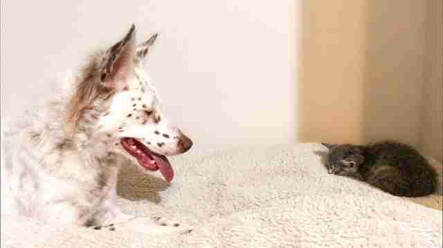 Эта чудная гавайская собака как будто усыпана веснушками! Догадайтесь, чем она занимается всё свободное время