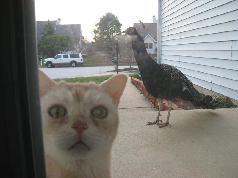 Впусти меня!
