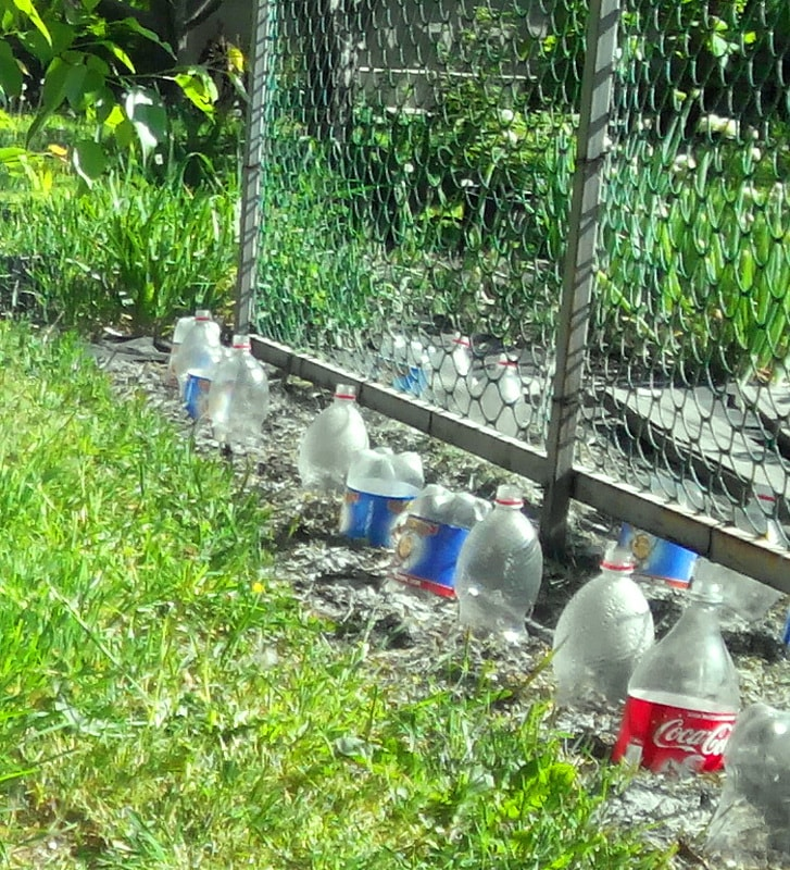 посадка семян огурцов в открытый грунт под пластиковые бутылки