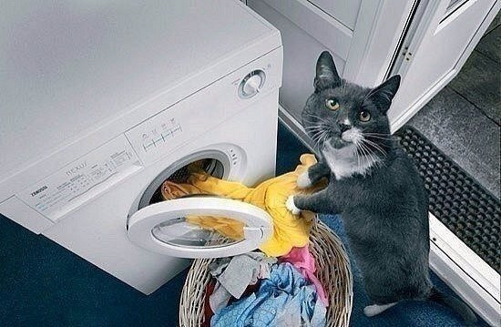 Мне срочно нужен этот кот