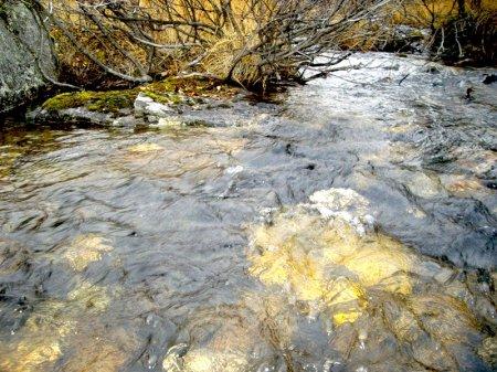 Вода золотая