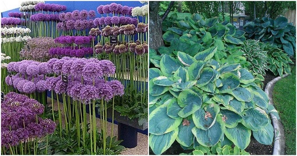 Источник вдохновения: шикарные цветочные идеи для сада и дачи