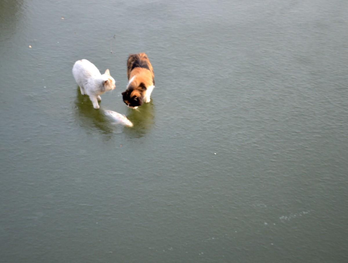 Как два кота на рыбалку ходили