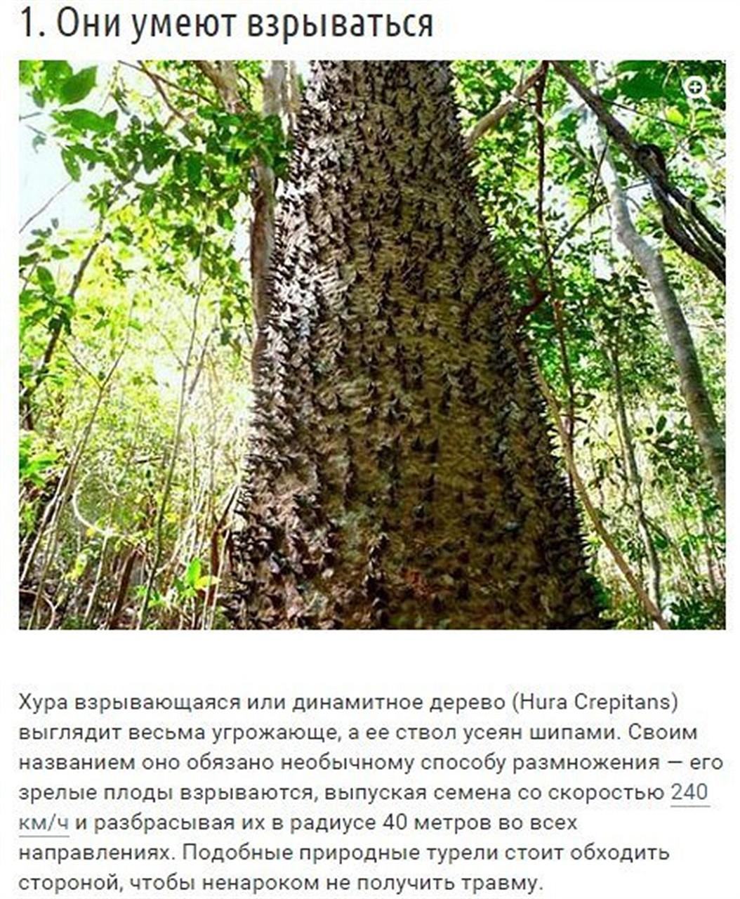 10 странных вещей, которые умеют делать деревья природа, факты