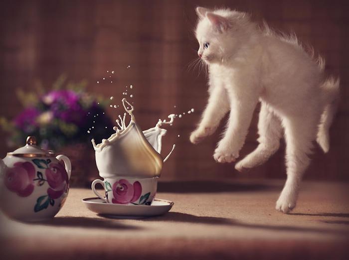 1 марта в России - День кошек