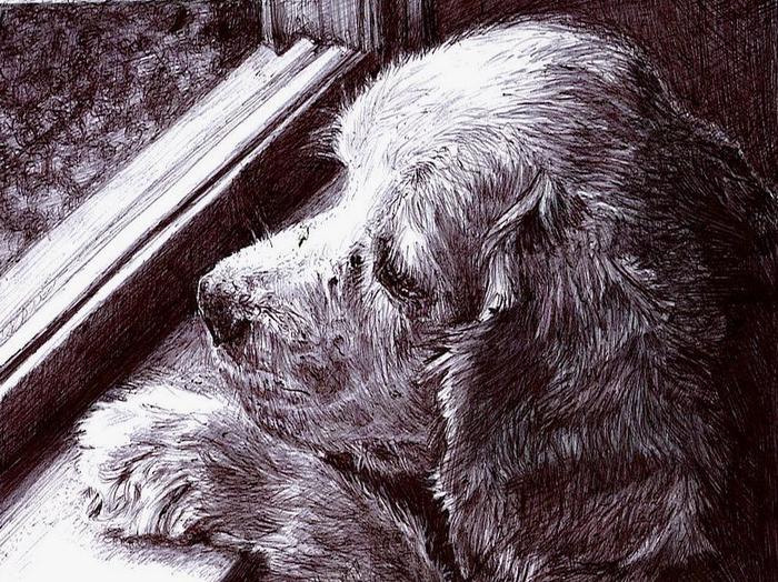 рисунки карандашом Maria Zeldis -2-03