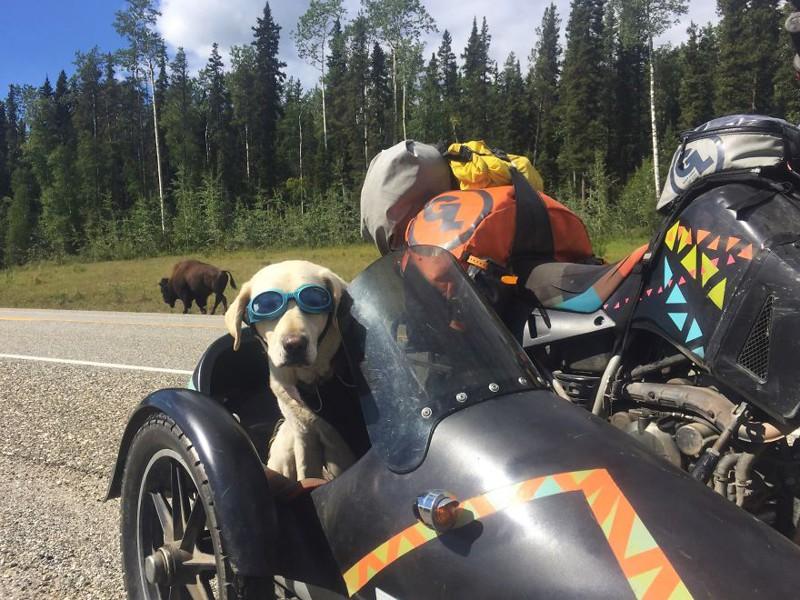 Путешествие на мотоцикле вместе с собакой аляска, путешествие