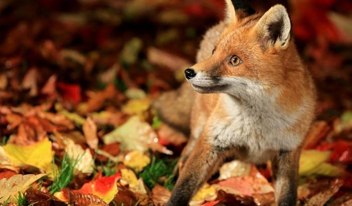 осень и животные 4 (700x410, 293Kb)